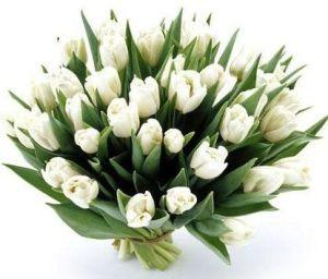 lalele albe